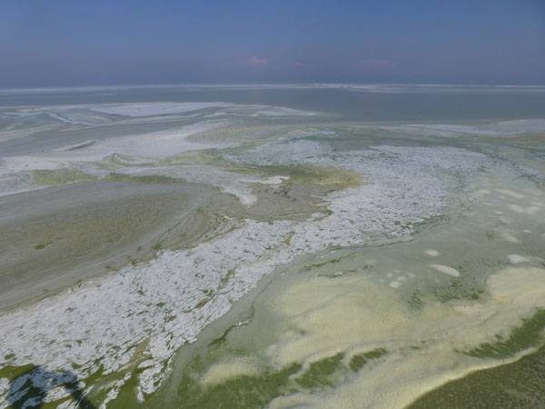 Lake Erie cyano swirl