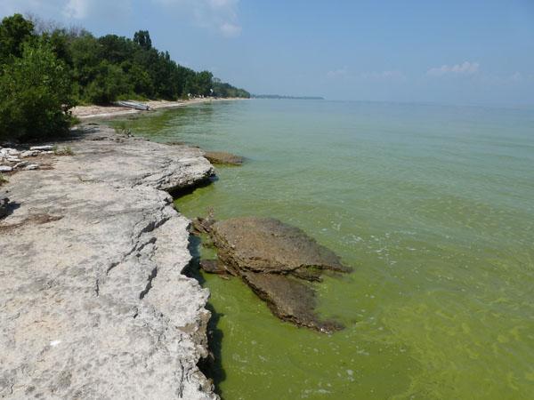 Lake Erie cyanobacterial bloom