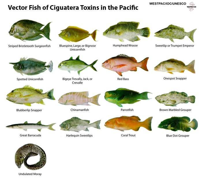 CFP vector fish