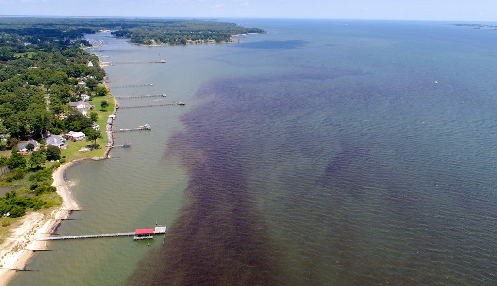 Bloom streaks in the York River near the entrance  to Mobjack Bay on July 27, 2017. Drone imagery by VIMS professor Donglai Gong.