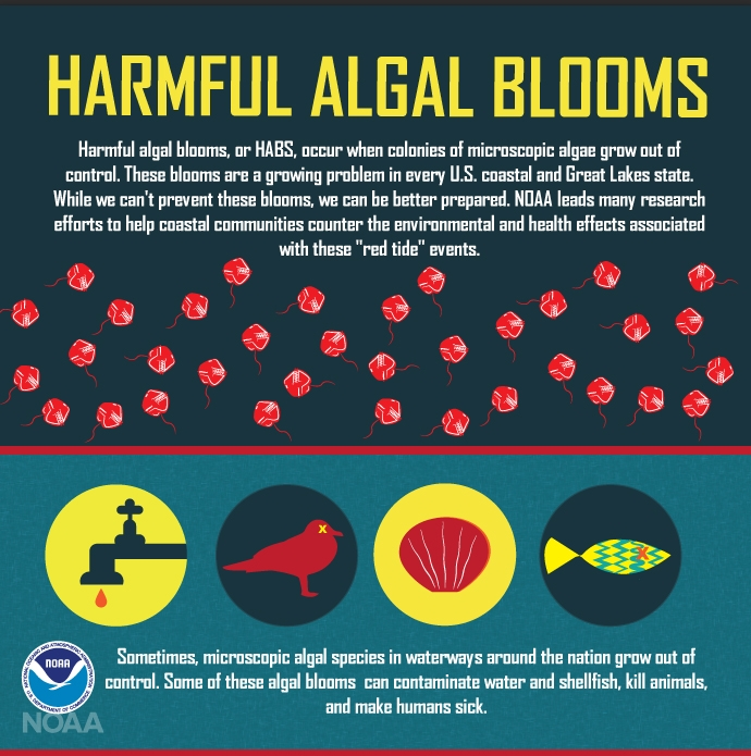 Harmful algal blooms, are a growing problem in every U.S. coastal and Great Lakes state. While we can't prevent these blooms, monitoring  programs help coastal communities counter the environmental and health effects associated with these events. (NOAA)