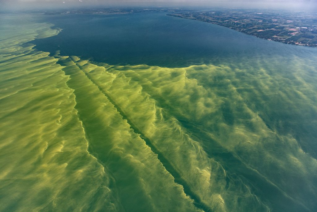 Cyanobacteria bloom in Lake Erie.  Photo courtesy of Tim Davis.