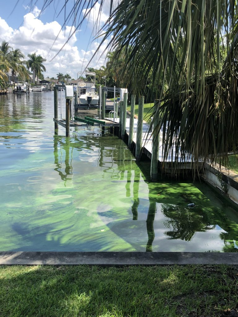 Residential canal in Cape Coral, FL, with blooms of the microcystin-producing blue-green algal <em>Microcystis</em>. Credit: M. Parsons.
