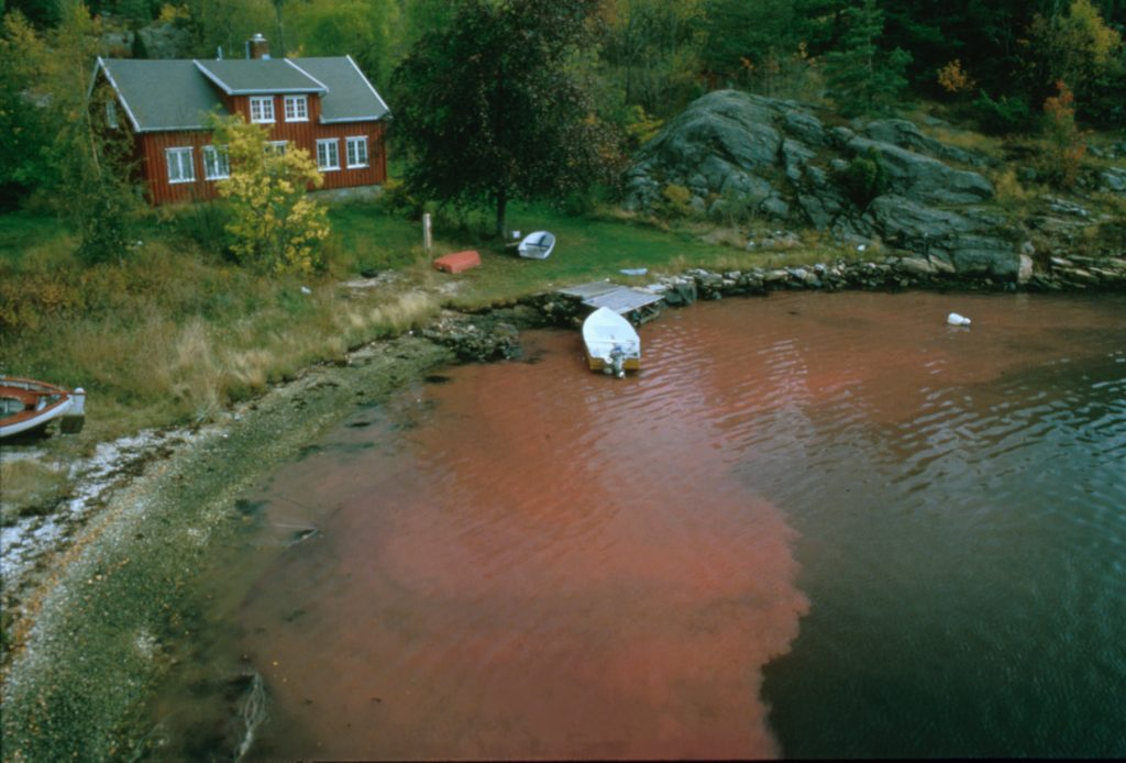<i> Dinophysis </i> bloom in Norway (E. Dahl)