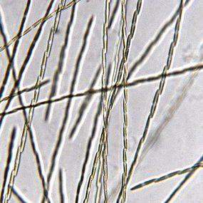 MicroscopeName: Jennifer