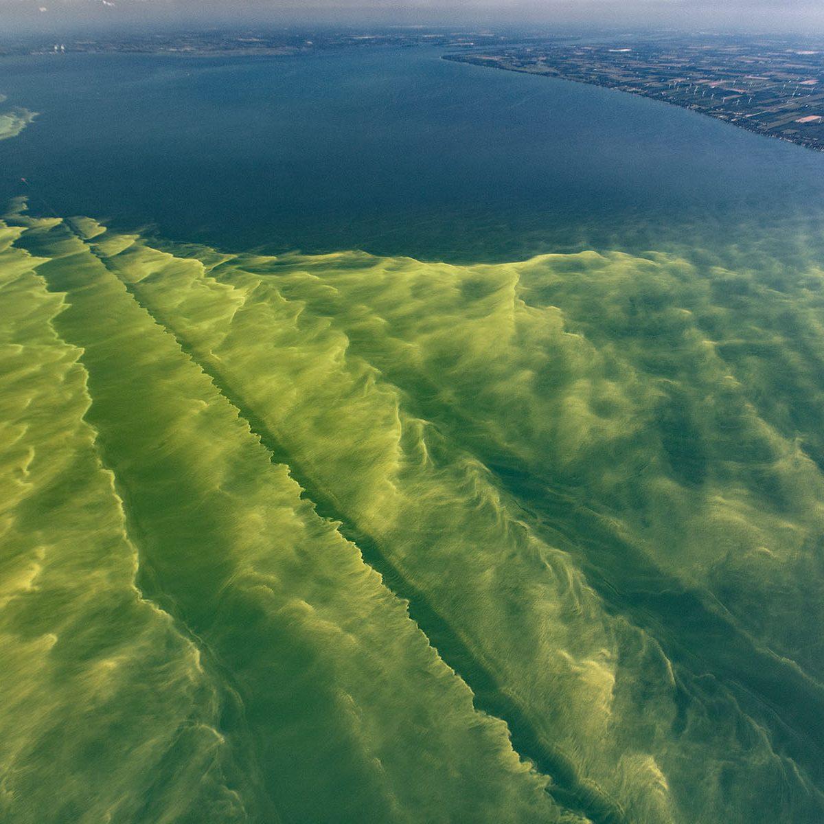 Cyanobacteria bloom in Lake Erie.  Photo courtesy of Tim Davis.