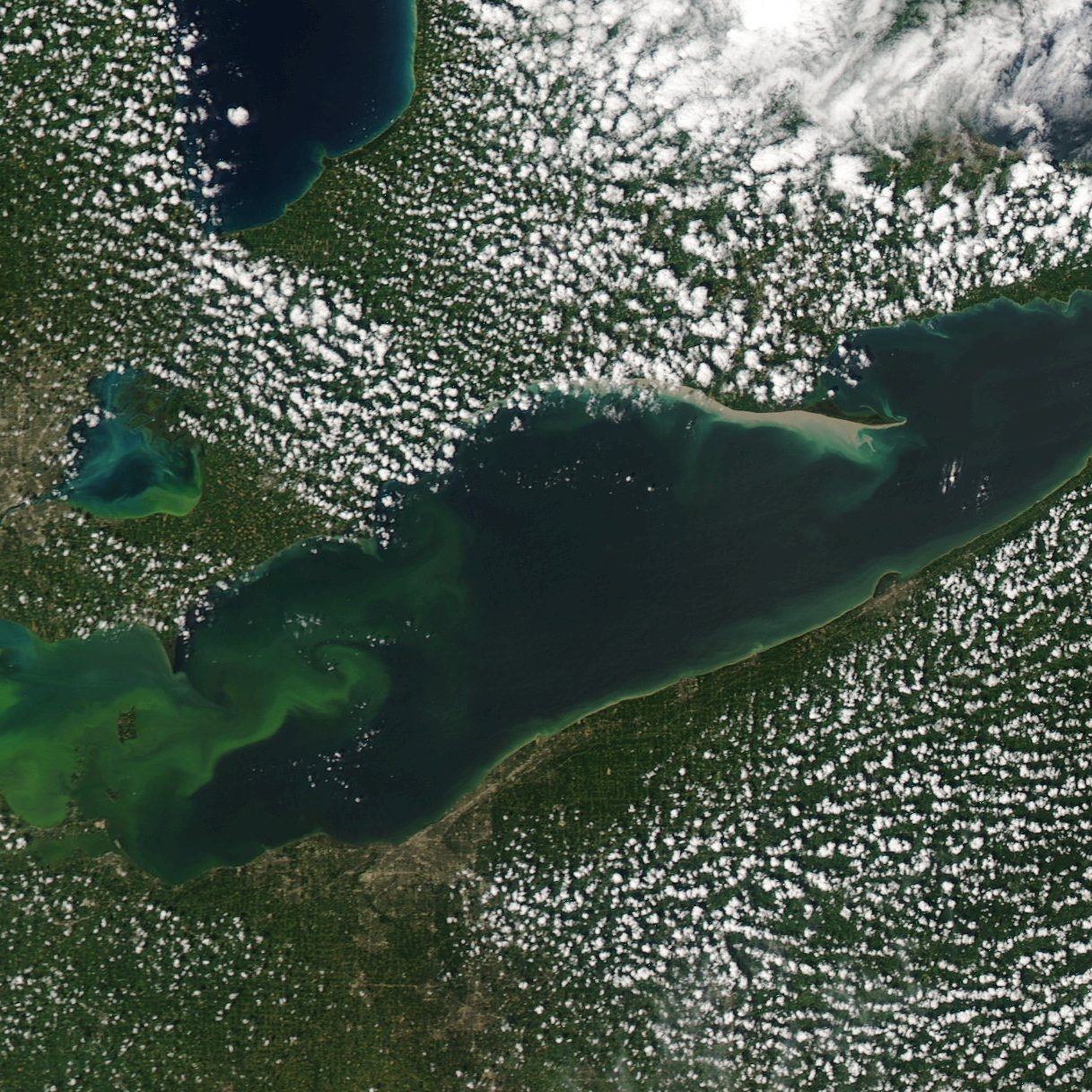 MODIS (aqua) satellite image of Lake Erie harmful algal bloom, August 21, 2015. Credit: NOAA Great Lakes CoastWatch